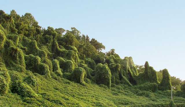 Kudzu's Sordid History In North America