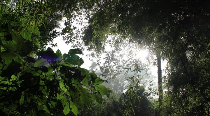 That Pristine Jungle? Humans Have Been Altering It For 45,000 Years