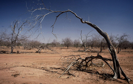What, Exactly, Causes Trees To Die During Drought?