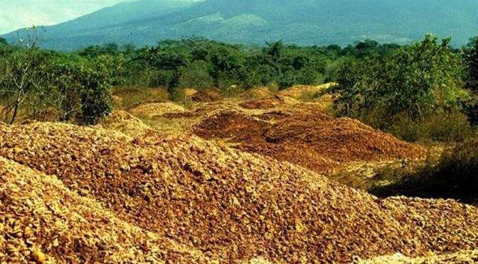 How 1,000 Truckloads Of Orange Peels Turned Barren Land Into A Rich Carbon-Sequestering Forest