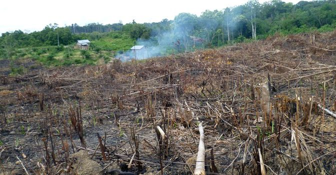 Deforestation For Palm Oil Is Changing Indonesia's Climate