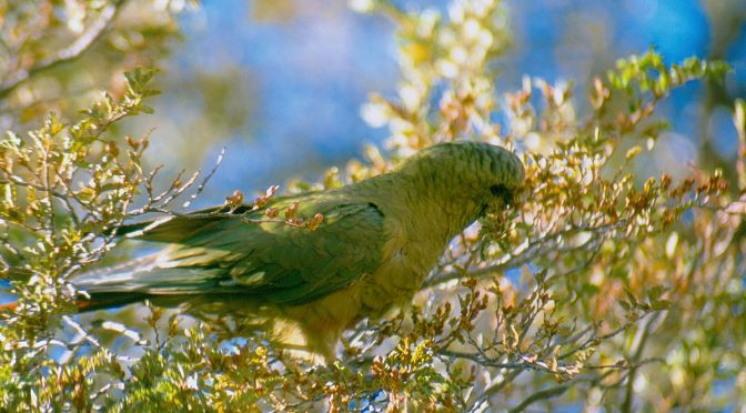 How Researchers' Inexperience Revealed The Positive Relationship Of Parrots And Plants