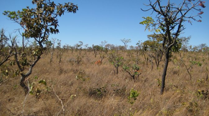 What Makes Tropical Area A Rain Forest Instead Of A Savanna? Soil Depth Plays A Role.