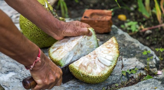 With Cacao Crops Threatened Can Jackfruit Be Chocolate's Replacement?