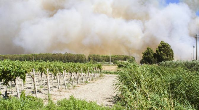 How Grape Vines' Chemical Memory Of Forest Fires Taints Wine