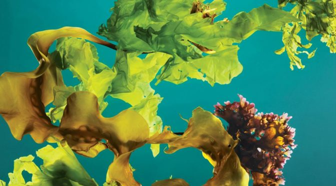Will Kelp Farming Slow Climate Change?