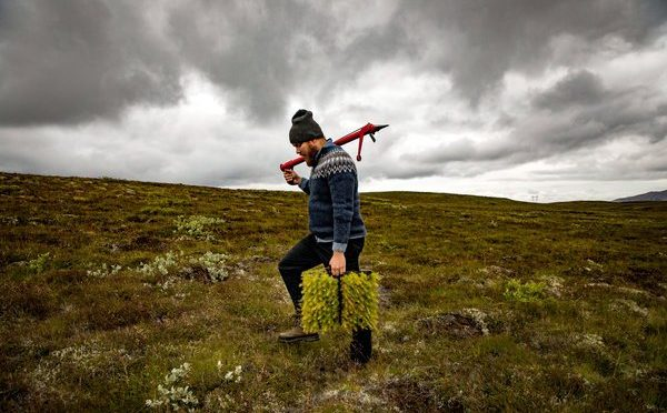 Can Iceland Restore Forests Destroyed By Viking Ancestors?