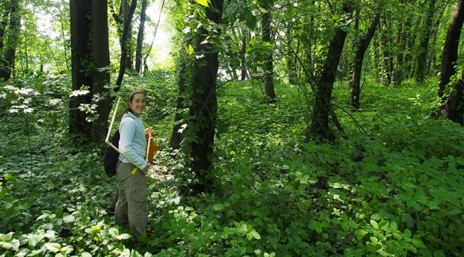 Invasive Knotweed Actually Displaces Forests While Poison Ivy Preserves Them