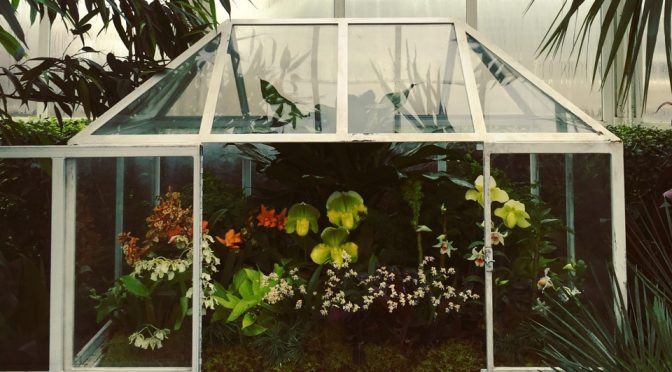 The Little 19th Century Terrarium That Changed Our Lives