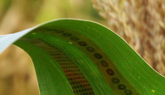 Wearable Sensors For Plants Enable Precise Monitoring
