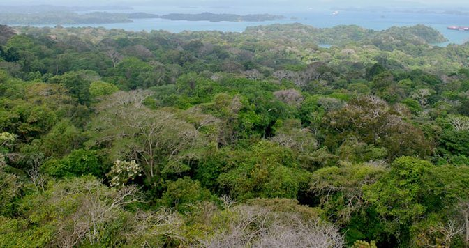 The Last Place You'd Look: Climate Change Is Affecting Even Tropical Forests