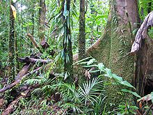Trees In Moist Tropics Are Dying Faster Then Ever Accelerating Climate Change