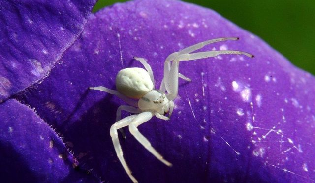 Spiders Discovered To Act As Defenders Of Plants